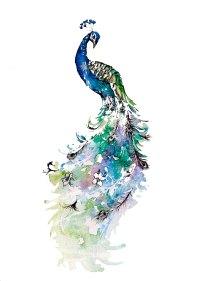 peacockwatercolour